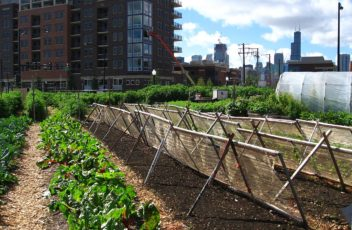 1280px-New_crops-Chicago_urban_farm